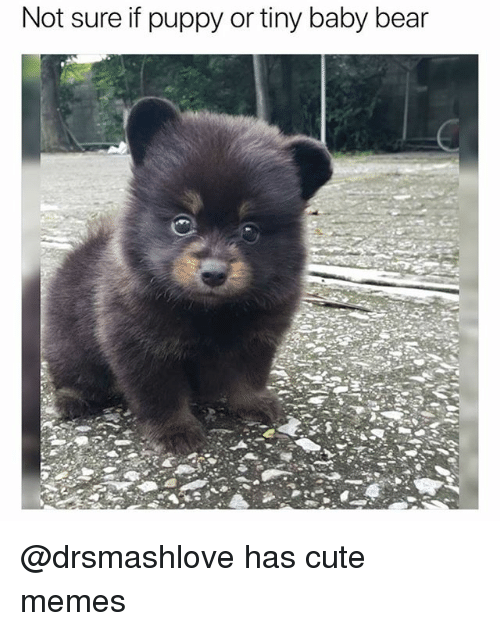 Cute, Funny, and Memes: Not sure if puppy or tiny baby bear @drsmashlove has cute memes