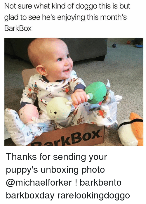 Memes, 🤖, and Doggo: Not sure what kind of doggo this is but  glad to see he's enjoying this month's  Bark Box  Box  ark Thanks for sending your puppy's unboxing photo @michaelforker ! barkbento barkboxday rarelookingdoggo