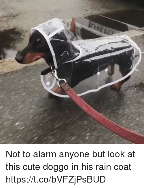 Cute, Alarm, and Rain: Not to alarm anyone but look at this  cute doggo in his rain coat https://t.co/bVFZjPsBUD