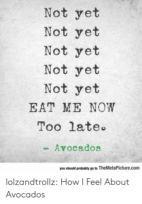 Tumblr, Blog, and How: Not yet  Not yet  Not yet  Not yet  Not yet  EAT ME NOW  Too late  Avocados  you should probably go to TheMetaPicture.com lolzandtrollz:  How I Feel About Avocados
