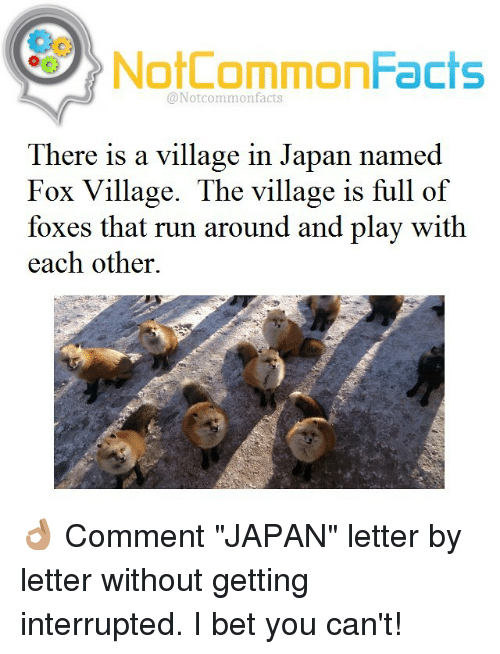 """The Villager: NotCommonFacts  @Notcommon facts  There is a village in Japan named  Fox Village. The village is full of  foxes that run around and play with  each other. 👌🏽 Comment """"JAPAN"""" letter by letter without getting interrupted. I bet you can't!"""