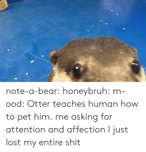 Mood, Shit, and Target: note-a-bear:  honeybruh:   m–ood: Otter teaches human how to pet him.  me asking for attention and affection   I just lost my entire shit