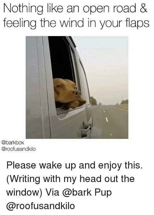 winding: Nothing like an open road &  feeling the wind in your flaps  @barkbox  @roofusandkilo Please wake up and enjoy this. (Writing with my head out the window) Via @bark Pup @roofusandkilo