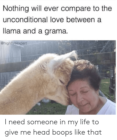 compare: Nothing will ever compare to the  unconditional love between a  lama and a grama  @highfiveexpert I need someone in my life to give me head boops like that