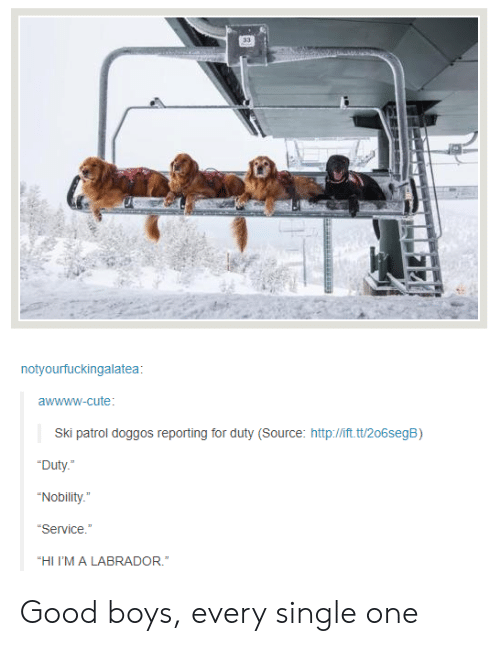 "Cute, Good, and Http: notyourfuckingalatea:  awwww-cute  Ski patrol doggos reporting for duty (Source: http://ift.t/206segB)  Duty.  Nobility.""  Service  ""HI I'MALABRADOR. Good boys, every single one"