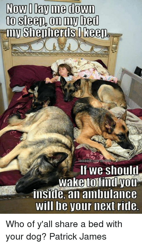 Facebook, Memes, and Sleep: Now I Day me down  to sleep, On my bed  Sh  FACEBOOK CO  If we should  insitle, an ambulance  will be your next ridle Who of y'all share a bed with your dog?  Patrick James