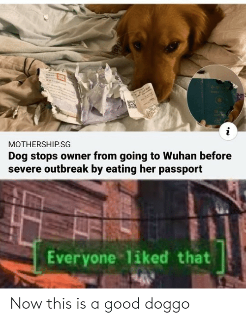 now this: Now this is a good doggo