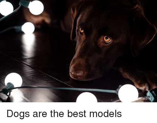 Dogs, Love, and Best: ns 2018 Dogs are the best models