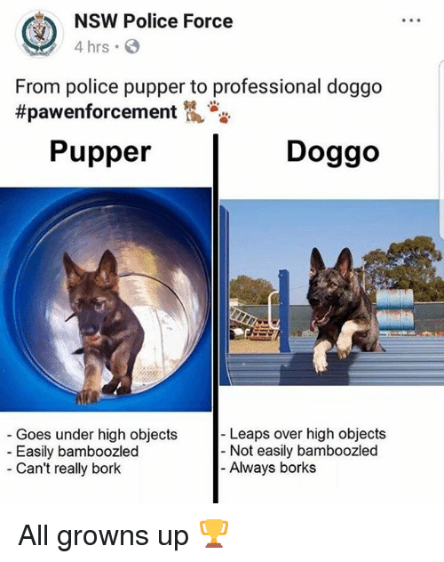 Borks: NSW Police Force  4 hrs  From police pupper to professional doggo  #pawenforcement侃沓沓  Pupper  Doggo  Leaps over high objects  Goes under high objects  Easily bamboozled  Can't really bork  - Not easily bamboozled  Always borks All growns up 🏆