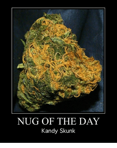 Memes, 🤖, and Skunk: NUG OF THE DAY  Kandy Skunk