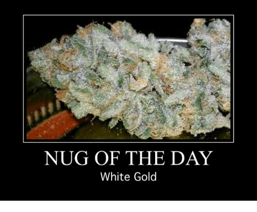 Memes, White, and 🤖: NUG OF THE DAY  White Gold