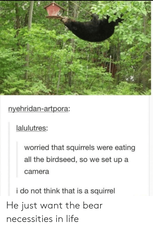 Life, Bear, and Camera: nvehridan-artpora:  lalulutres:  worried that squirrels were eating  all the birdseed, so we set up a  camera  i do not think that is a squirrel He just want the bear necessities in life