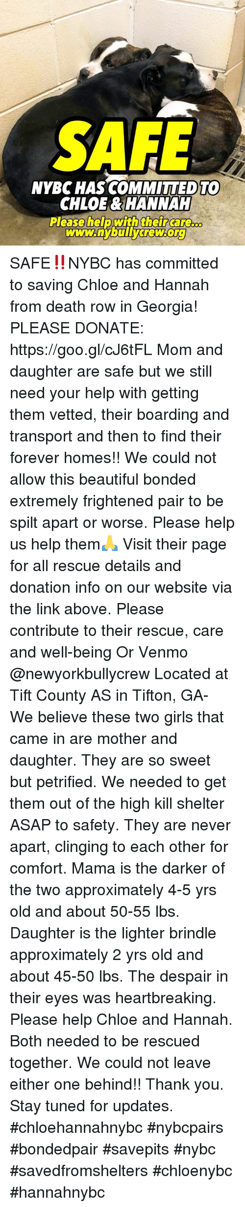 Beautiful, Girls, and Memes: NYBC HAS COMMITTED TO  CHLOE& HANNAH  Please help withtheircarG  www.nybu SAFE‼️NYBC has committed to saving Chloe and Hannah from death row in Georgia! PLEASE DONATE: https://goo.gl/cJ6tFL  Mom and daughter are safe but we still need your help with getting them vetted, their boarding and transport and then to find their forever homes!! We could not allow this beautiful bonded extremely frightened pair to be spilt apart or worse. Please help us help them🙏  Visit their page for all rescue details and donation info on our website via the link above. Please contribute to  their rescue, care and well-being Or Venmo @newyorkbullycrew   Located at Tift County AS  in Tifton, GA- We believe these two girls that came in are mother and daughter. They are so sweet but  petrified.  We needed to get them out of the high kill shelter ASAP to safety. They are never apart, clinging to each other for comfort. Mama is the darker of the two approximately 4-5 yrs old and about 50-55 lbs. Daughter is the lighter brindle approximately 2 yrs old and about 45-50 lbs. The despair in their eyes was heartbreaking.  Please help Chloe and Hannah.  Both needed to be rescued together. We could not leave either one behind!! Thank you. Stay tuned for updates.   #chloehannahnybc #nybcpairs #bondedpair #savepits #nybc #savedfromshelters #chloenybc #hannahnybc
