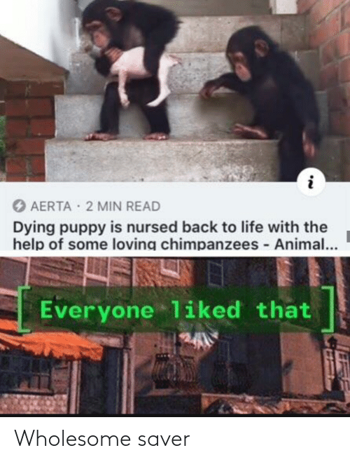 Animal: O AERTA 2 MIN READ  Dying puppy is nursed back to life with the  help of some loving chimpanzees - Animal...  Everyone liked that Wholesome saver