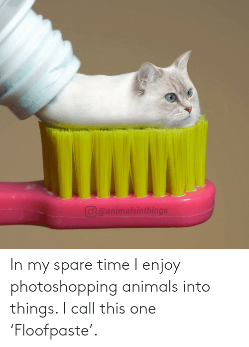 Spare: O@animalsinthings In my spare time I enjoy photoshopping animals into things. I call this one 'Floofpaste'.