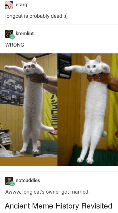 Cats, Meme, and History: o erarg  longcat is probably dead:  kremlint  WRONG  notcuddles  Awww, long cat's owner got married. Ancient Meme History Revisited