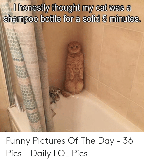 Funny Pictures Of: O honestly thought my cat was a  shampoo bottle for a solid 5 minutes. Funny Pictures Of The Day - 36 Pics - Daily LOL Pics