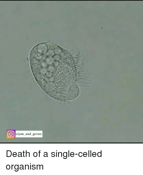 organism: O@jam and germs Death of a single-celled organism