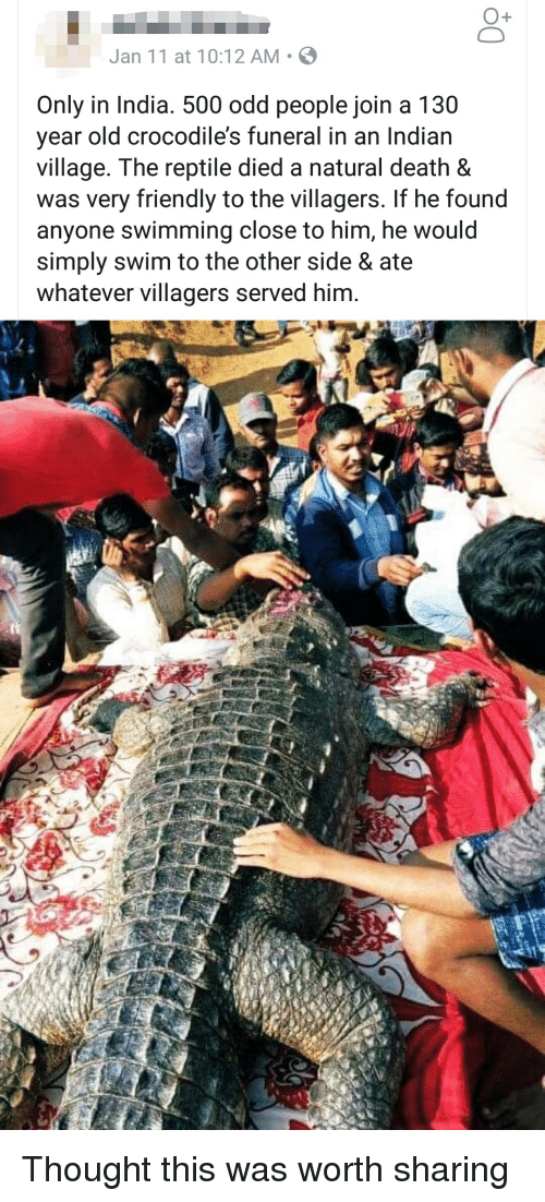 Death, India, and Old: O+  Jan 11 at 10:12 AM S  Only in India. 500 odd people join a 130  year old crocodile's funeral in an Indiarn  village. The reptile died a natural death &  was very friendly to the villagers. If he found  anyone swimming close to him, he would  simply swim to the other side & ate  whatever villagers served him.
