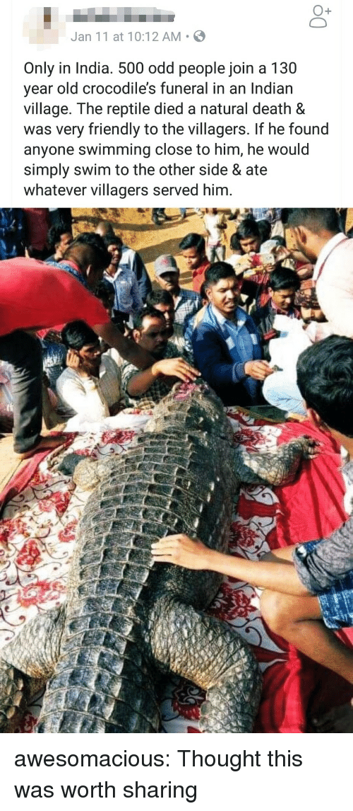 Tumblr, Blog, and Death: O+  Jan 11 at 10:12 AM S  Only in India. 500 odd people join a 130  year old crocodile's funeral in an Indian  village. The reptile died a natural death &  was very friendly to the villagers. If he found  anyone swimming close to him, he would  simply swim to the other side & ate  whatever villagers served him. awesomacious:  Thought this was worth sharing