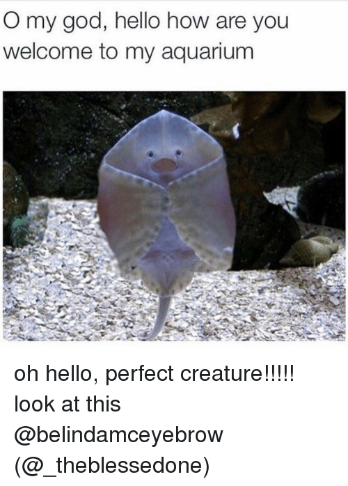 O My God: O my god, hello how are you  welcome to my aquarium oh hello, perfect creature!!!!! look at this @belindamceyebrow (@_theblessedone)