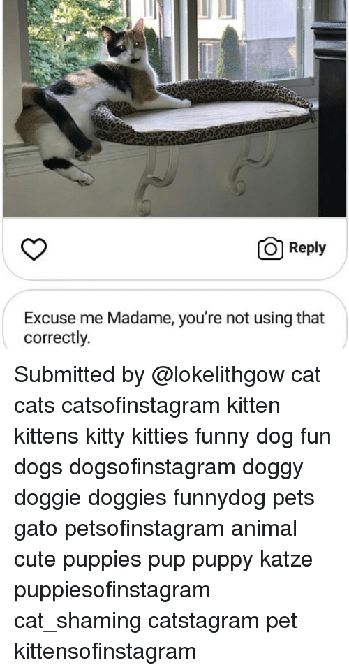 Cats, Cute, and Dogs: O Reply  Excuse me Madame, you're not using that  correctly. Submitted by @lokelithgow cat cats catsofinstagram kitten kittens kitty kitties funny dog fun dogs dogsofinstagram doggy doggie doggies funnydog pets gato petsofinstagram animal cute puppies pup puppy katze puppiesofinstagram cat_shaming catstagram pet kittensofinstagram