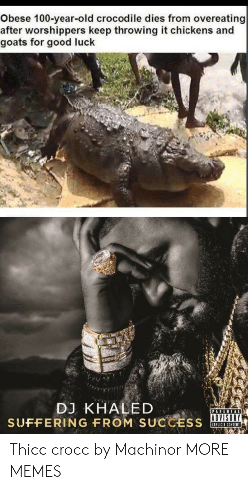 DJ Khaled: Obese 100-year-old crocodile dies from overeating  after worshippers keep throwing it chickens and  goats for good luck  Odos  DJ KHALED  SUFFERING FROM SUCCSOA  ADVISORY  IPLICIT CONTENT Thicc crocc by Machinor MORE MEMES