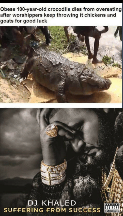 DJ Khaled: Obese 100-year-old crocodile dies from overeating  after worshippers keep throwing it chickens and  goats for good luck  DJ KHALED  SUFFERING FROM SUCCESS  PARENTAL  EIPLICIT CONTENT