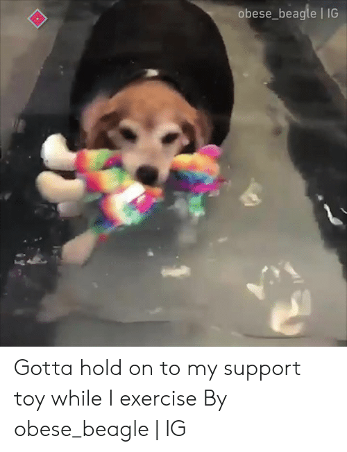 Dank, Exercise, and 🤖: obese_beagle 1IG Gotta hold on to my support toy while I exercise  By obese_beagle | IG