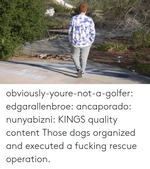 organized: obviously-youre-not-a-golfer:  edgarallenbroe:  ancaporado:  nunyabizni: KINGS quality content    Those dogs organized and executed a fucking rescue operation.