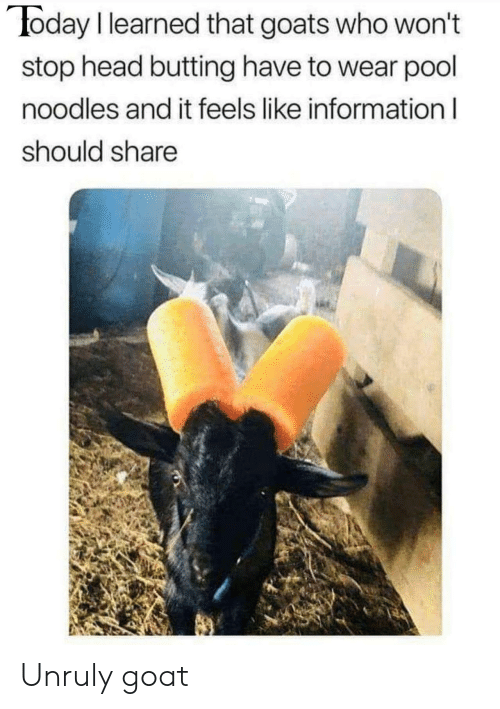 Head, Goat, and Information: oday I learned that goats who won't  stop head butting have to wear pool  noodles and it feels like information l  should share Unruly goat