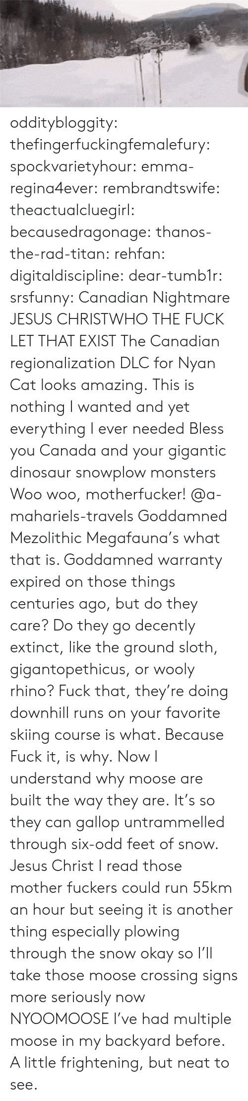 Dinosaur, Jesus, and Run: odditybloggity: thefingerfuckingfemalefury:  spockvarietyhour:  emma-regina4ever:  rembrandtswife:  theactualcluegirl:  becausedragonage:  thanos-the-rad-titan:  rehfan:  digitaldiscipline:  dear-tumb1r:  srsfunny:  Canadian Nightmare  JESUS CHRISTWHO THE FUCK LET THAT EXIST  The Canadian regionalization DLC for Nyan Cat looks amazing.  This is nothing I wanted and yet everything I ever needed Bless you Canada and your gigantic dinosaur snowplow monsters  Woo woo, motherfucker!  @a-mahariels-travels  Goddamned Mezolithic Megafauna's what that is.  Goddamned warranty expired on those things centuries ago, but do they care?  Do they go decently extinct, like the ground sloth, gigantopethicus, or wooly rhino?  Fuck that, they're doing downhill runs on your favorite skiing course is what.  Because Fuck it, is why.  Now I understand why moose are built the way they are. It's so they can gallop untrammelled through six-odd feet of snow.  Jesus Christ I read those mother fuckers could run 55km an hour but seeing it is another thing especially plowing through the snow  okay so I'll take those moose crossing signs more seriously now  NYOOMOOSE  I've had multiple moose in my backyard before. A little frightening, but neat to see.