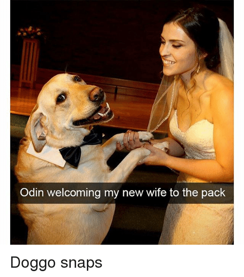 Funny, Wife, and Odin: Odin welcoming my new wife to the pack Doggo snaps