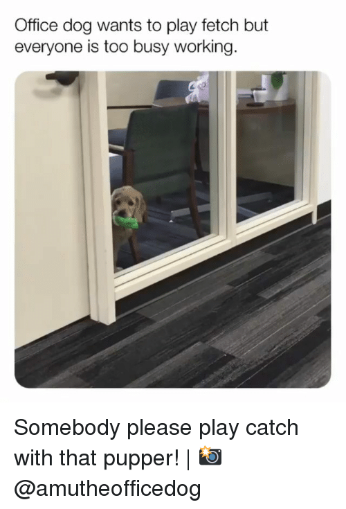 Memes, Office, and 🤖: Office dog wants to play fetch but  everyone is too busy working. Somebody please play catch with that pupper!   📸 @amutheofficedog