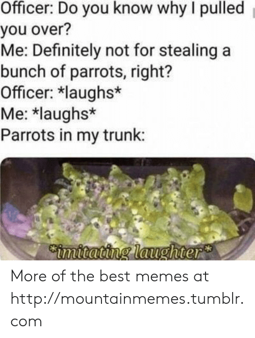 stealing: Officer: Do you know why I pulled  you over?  Me: Definitely not for stealing a  bunch of parrots, right?  Officer: laughs*  Me: *laughs*  Parrots in my trunk:  Cimitating laughter More of the best memes at http://mountainmemes.tumblr.com