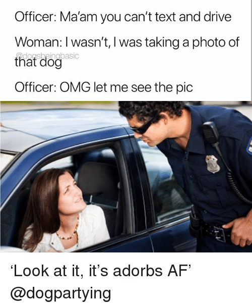 Af, Memes, and Omg: Officer: Ma'am you can't text and drive  Woman: I wasn't, l was taking a photo of  that dog  Officer: OMG let me see the pic 'Look at it, it's adorbs AF' @dogpartying