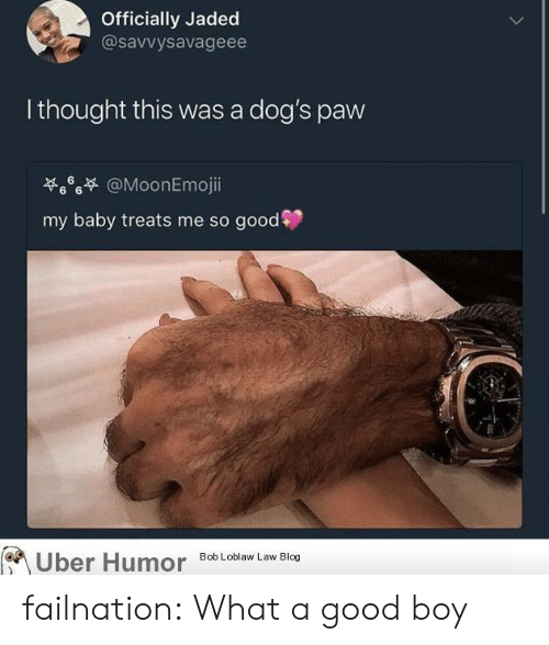 Dogs, Tumblr, and Blog: Officially Jaded  @savvysavageee  lthought this was a dog's paw  .6% @MoonEmoj..  my baby treats me so good  ber Humor  8ob Loblaw Law Blog failnation:  What a good boy