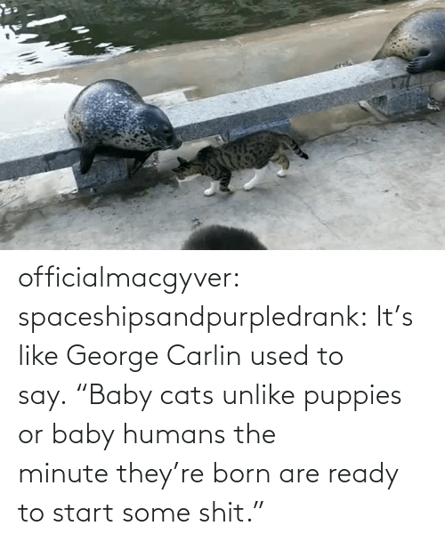"Puppies: officialmacgyver:  spaceshipsandpurpledrank:  It's like George Carlin used to say. ""Baby cats unlike puppies or baby humans the minute they're born are ready to start some shit."""