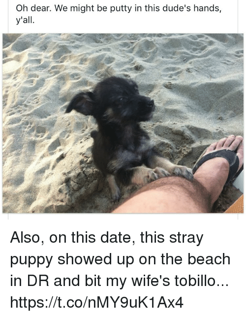Memes, Beach, and Date: Oh dear. We might be putty in this dude's hands,  y'all Also, on this date, this stray puppy showed up on the beach in DR and bit my wife's tobillo... https://t.co/nMY9uK1Ax4
