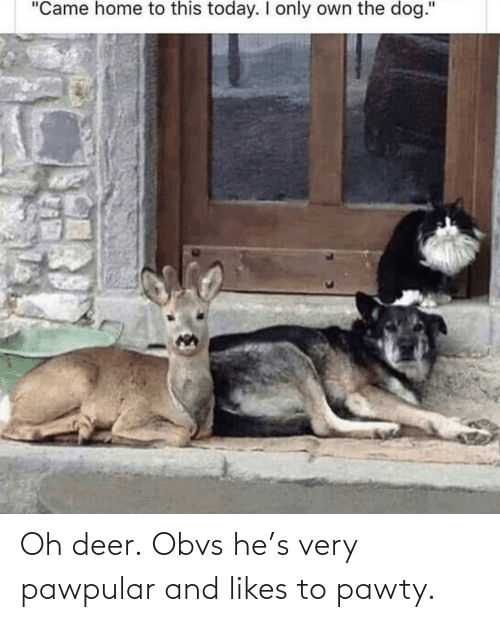 likes: Oh deer.Obvs he's very pawpular and likes to pawty.