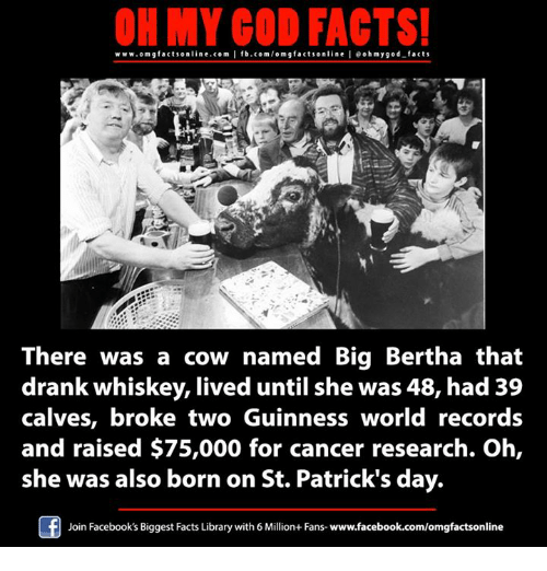 Facebook, Facts, and God: OH MY GOD FACTS!  www.omg facts online.com  I fb.com/omg facts online oh my god-facts  g There was a cow named Big Bertha that  drank whiskey, lived until she was 48, had 39  calves, broke two Guinness world records  and raised $75,000 for cancer research. Oh,  she was also born on St. Patrick's day.  Join Facebook's Biggest Facts Library with6Million+ Fans- www.facebook.com/omgfactsonline