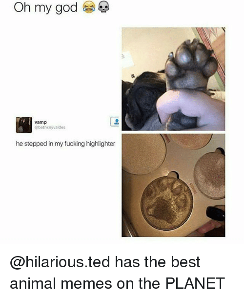 Fucking, God, and Memes: Oh my god  vamp  @bethxnyvaldes  he stepped in my fucking highlighter @hilarious.ted has the best animal memes on the PLANET