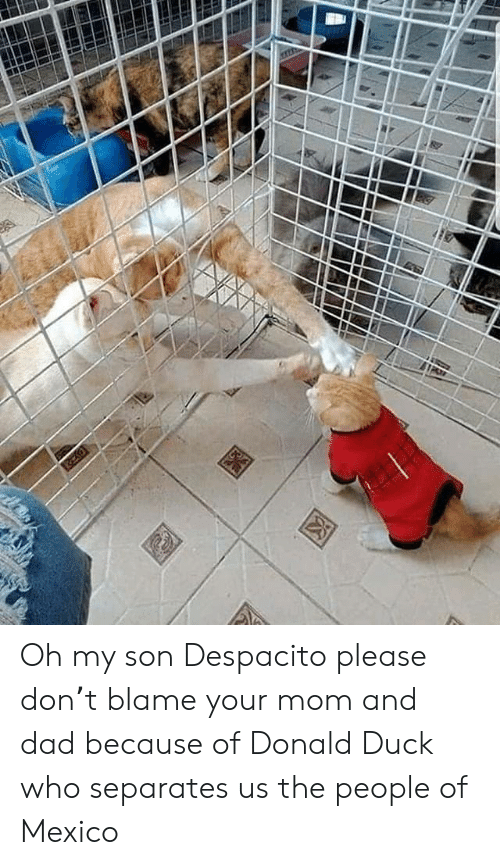 mom and dad: Oh my son Despacito please don't blame your mom and dad because of Donald Duck who separates us the people of Mexico