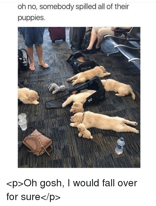 fall over: oh no, somebody spilled all of their  puppies. <p>Oh gosh, I would fall over for sure</p>