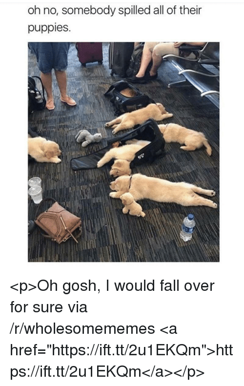 "fall over: oh no, somebody spilled all of their  puppies. <p>Oh gosh, I would fall over for sure via /r/wholesomememes <a href=""https://ift.tt/2u1EKQm"">https://ift.tt/2u1EKQm</a></p>"