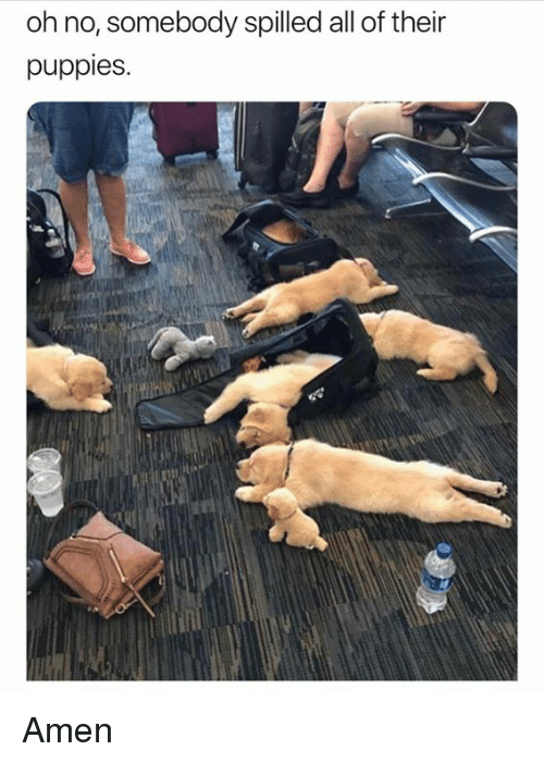 Dank, Puppies, and 🤖: oh no, somebody spilled all of their  puppies. Amen