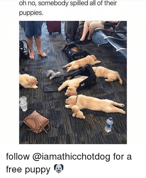 Puppies, Free, and Puppy: oh no, somebody spilled all of their  puppies. follow @iamathicchotdog for a free puppy 🐶