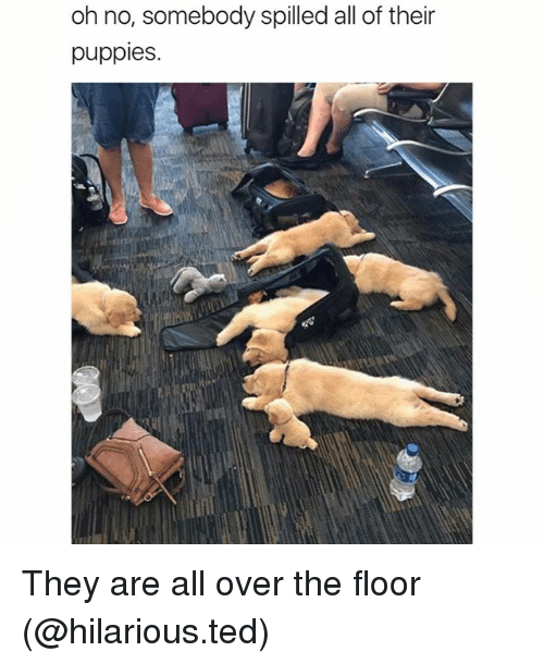 Funny, Puppies, and Ted: oh no, somebody spilled all of their  puppies. They are all over the floor (@hilarious.ted)