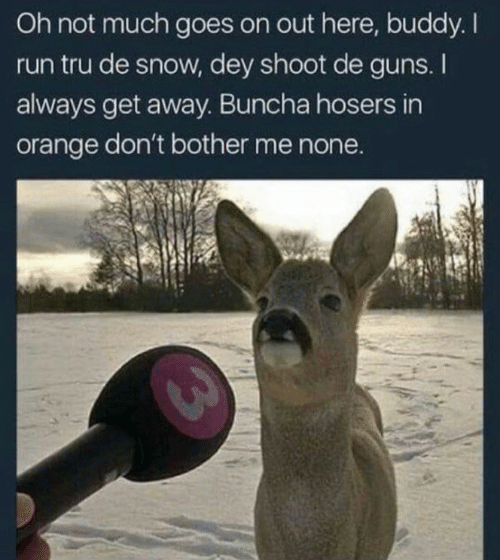 tru: Oh not much goes on out here, buddy. I  run tru de snow, dey shoot de guns. I  always get away. Buncha hosers in  orange don't bother me none.