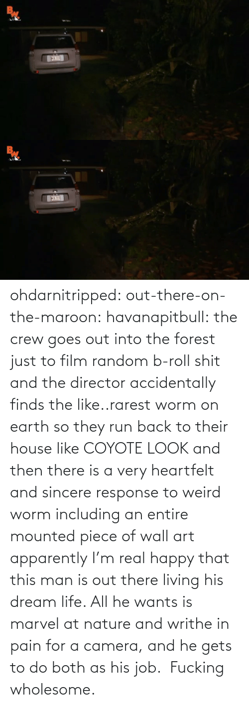 this man: ohdarnitripped:  out-there-on-the-maroon:  havanapitbull: the crew goes out into the forest just to film random b-roll shit and the director accidentally finds the like..rarest worm on earth so they run back to their house like COYOTE LOOK and then there is a very heartfelt and sincere response to weird worm including an entire mounted piece of wall art apparently I'm real happy that this man is out there living his dream life. All he wants is marvel at nature and writhe in pain for a camera, and he gets to do both as his job.    Fucking wholesome.